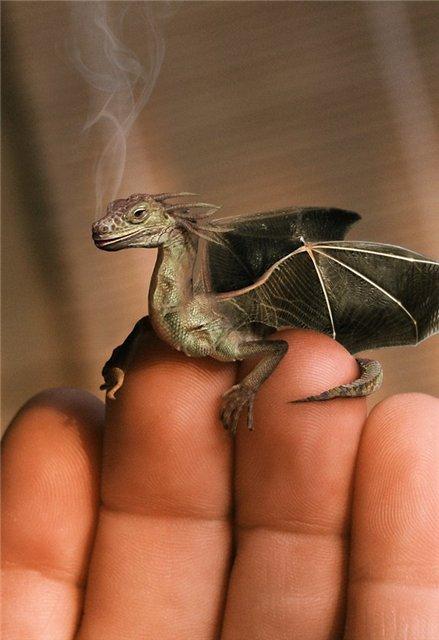 драконы фото на аватарку: