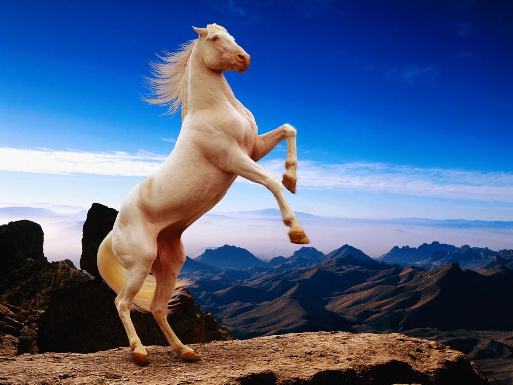 Лошадь встала на дыбы рисунок 6