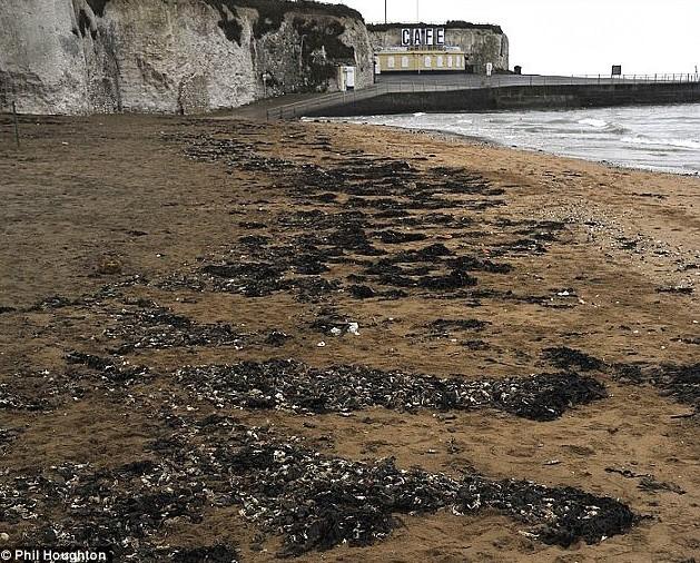 Мёртвые крабы на берегах пляжей Палм-Бэй