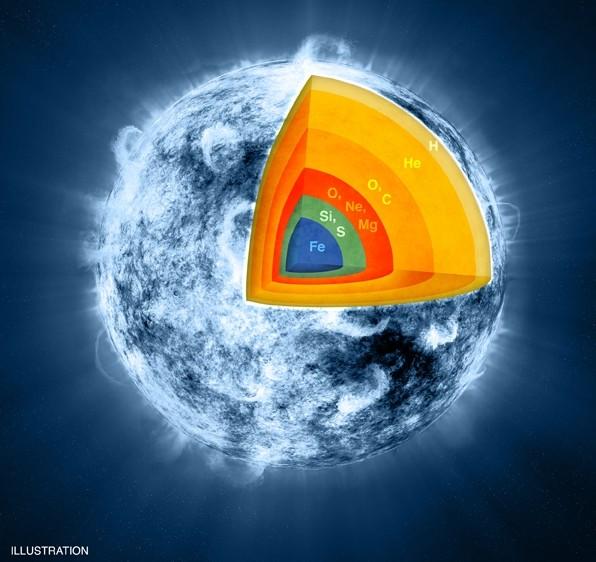 Распределение элементов в звезде-«прародительницы» сверхновой Кассиопеи А перед взрывом.
